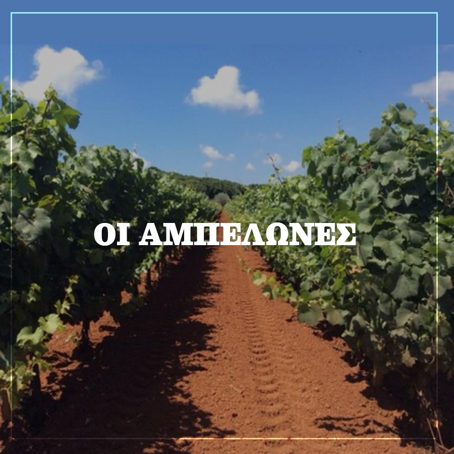 Οι Αμπελώνες Lacovino Winery