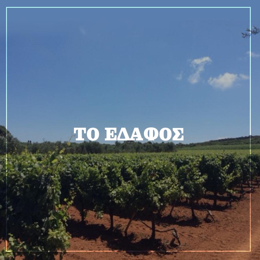 Το Έδαφος Lacovino Winery
