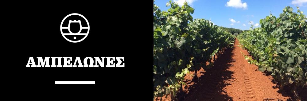 lacovino winery krasia wines ampelones